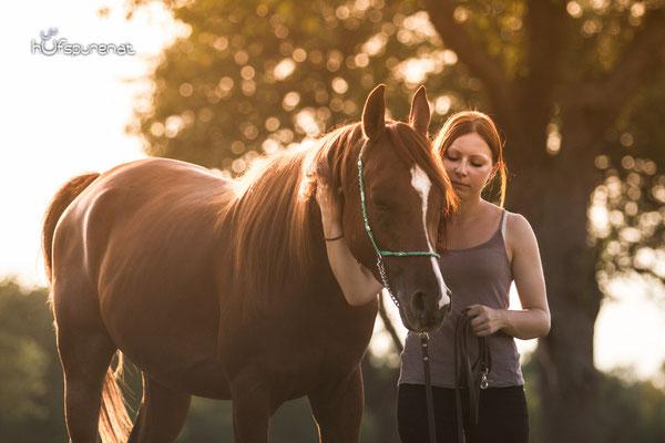 Pferdefotoshooting Arabisches Vollblut Santiago im stimmungsvollen Abendlicht