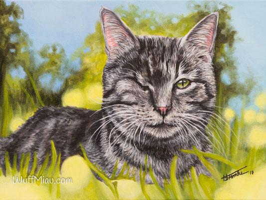 """Katze """"Nicky"""", Acryl auf Leinwand, 40x30, 2017, Katzenmalerei von Hanna Stemke, WuffMiau"""