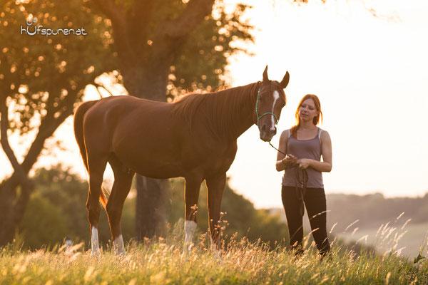 Pferdefotoshooting Arabisches Vollblut Santiago
