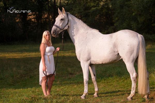Pferdefotoshooting westliches Niederösterreich, Schimmel Tarik