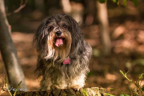Hundefotoshooting Winerwald