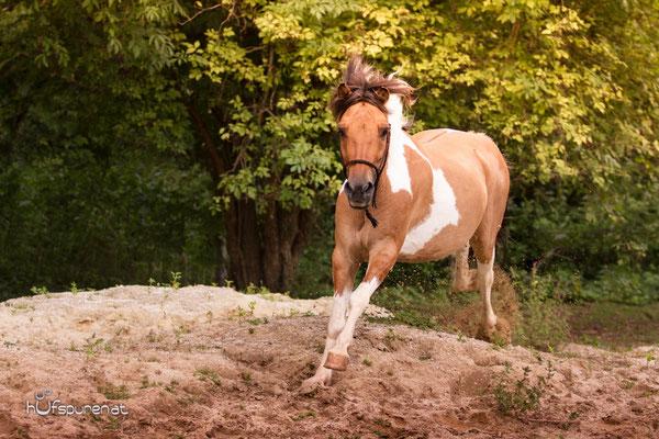 Pferdefotoshooting Lewitzer rennen auf Koppel
