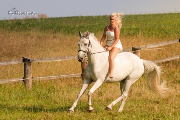 Pferdefotoshooting Mostviertel, Niederösterreich mit Springpferd ohne Sattel