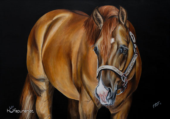 """Quarter Horse Stallion """"I Am A Ruf Boy"""", Acryl auf Leinwand, 90x60, 2016, Pferdemalerei von Hanna Stemke, Hufspuren"""