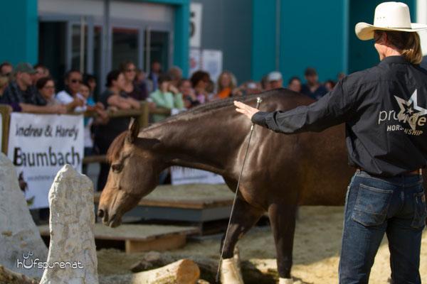 Thomas Günther von Pro-Ride Horsemanship, Extrem Trail Park, Americana