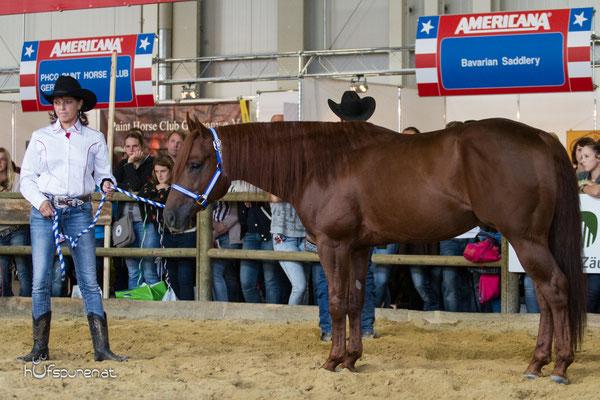 Gwhiz Im Smart, LQH bei Stallion Promotion Americana 2015, Decksprungversteigerung