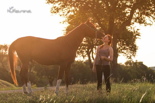 Pferdefotoshooting Arabisches Vollblut Santiago im Portrait bei Abendlicht