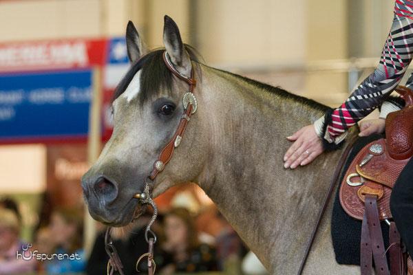 Lil Peppy Dunit Right, Stallion Promotion Americana 2015, Decksprungversteigerung