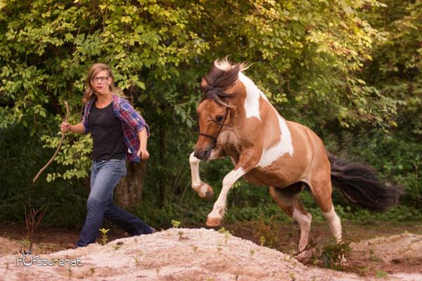 Pferdefotoshooting Lewitzer spielen auf Koppel