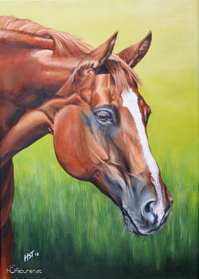 "Quarter Horse ""Sweet Coosalina"", Acryl auf Leinwand, 70x50, 2015, Pferdemalerei von Hanna Stemke, www.hufspuren.com"