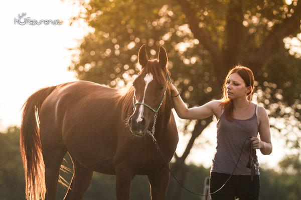 Pferdefotoshooting Arabisches Vollblut Santiago bei Sonnenuntergang