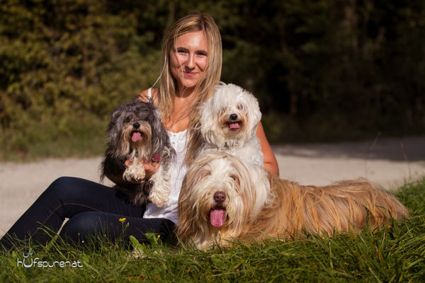 Hundefotoshooting Winerwald: Beardes Collie, Havaneser, Malteser