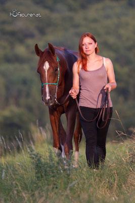 Pferdefotoshooting Arabisches Vollblut Santiago beim Spaziergang