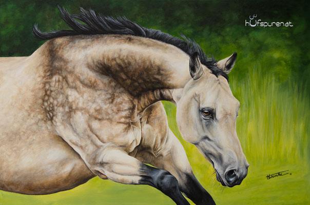 "Quarter Horse ""Solano Summertime"", Acryl auf Leinwand, 90x60, 2016, Pferdemalerei von Hanna Stemke, www.hufspuren.com"