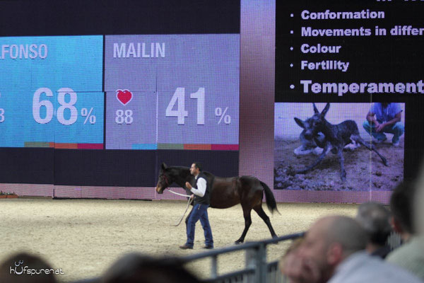 Alfonso Aguilar zeigt den Pulsmesser bei Pferd und Mensch in Stresssituationen