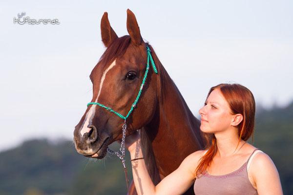 Pferdefotoshooting Arabisches Vollblut Santiago Kopfportrait