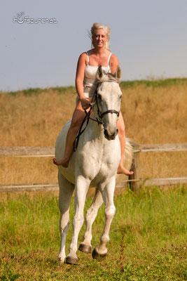Pferdefotoshooting Mostviertel, Niederösterreich mit Springpferd Tarik ohne Sattel