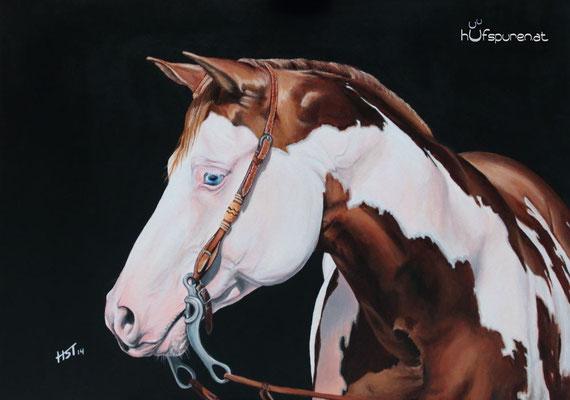 "Paint Horse ""Color My Gun"", Acryl auf Leinwand, 50x70, 2014, Pferdemalerei von Hanna Stemke, www.hufspuren.com"