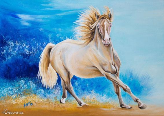 """Morgan Horse """"Roy"""", Acryl auf Leinwand, 70x50, 2015, Pferdemalerei von Hanna Stemke, www.hufspuren.com"""