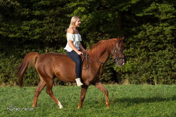 Pferdefotoshooting Wienerwald: Reitfotos Deitsches Reitpony