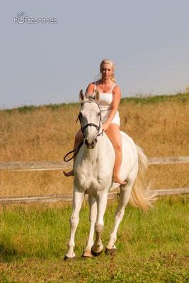Pferdefotoshooting Mostviertel, Niederösterreich mit Springpferd auf der Wiese