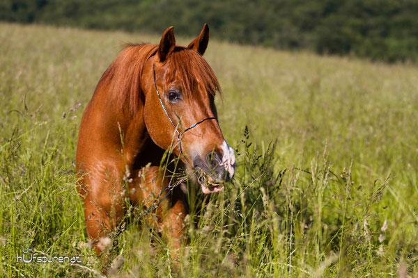 Hufspuren Pferdefotoshooting Wienerwald