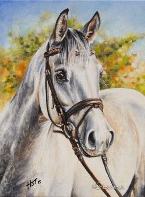 """Araber """"Pip Paulee"""", Acryl auf Leinwand, 40x30, 2015, Pferdemalerei von Hanna Stemke, www.hufspuren.com"""