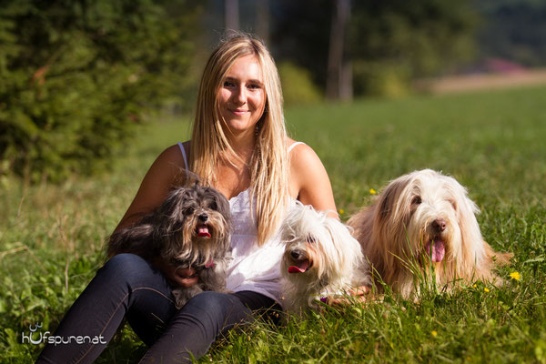 Hundefotoshooting Winerwald: Beardes Collie, Havaneser, Malteser