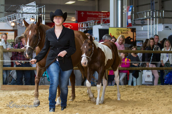 Paint Horse Zucht Fohlen Americana