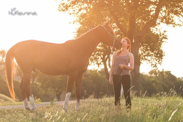 Sonnenuntergang Pferdefotoshooting Arabisches Vollblut Santiago