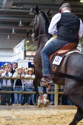 Stefan Baumgartner Working Equitation Americana 2015
