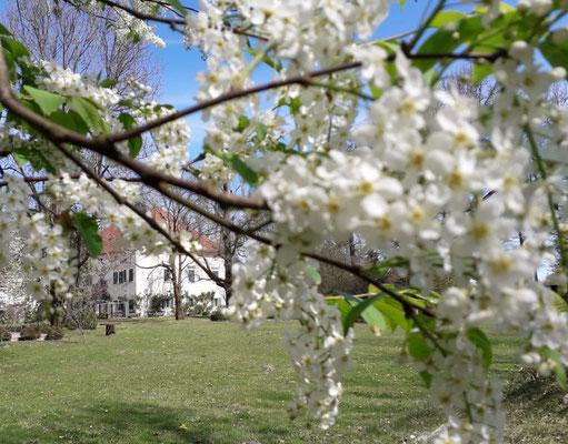 Schlosspark im Schloss Ebenau, Frühling ©Galerie Walker