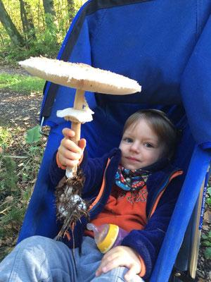 Ein Parasol für die kleine Frischpilz-Sammlung wurde schon am Tage vorher gesammelt