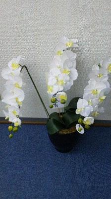 塾内にあるお花(造花)。名前はわかりますか?胡蝶蘭(ファレノプシス)です。花言葉は「幸運が飛んでくる」。