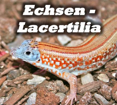 Echsen - Lacertilia