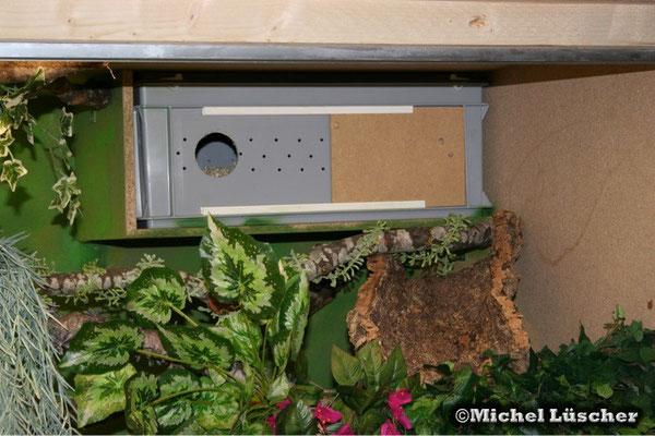 Schlupfbox im Terrarium.