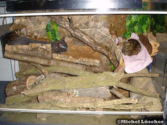 Miro & Itchy beim schlafen im Terri.