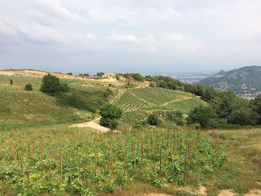 Cornas vineyard, with a view on Château de Crussol and Valence 2017