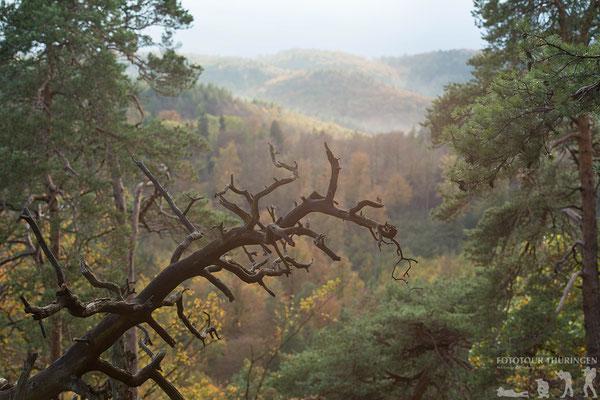 Ein bisschen wie im Regenwald, Foto: Melanie Kahl