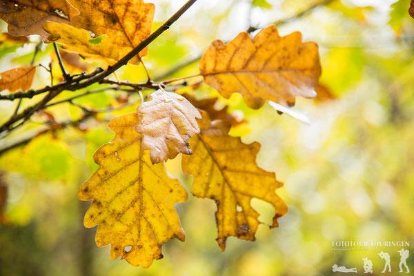Den Herbst in Szene setzen, Foto: Melanie Kahl