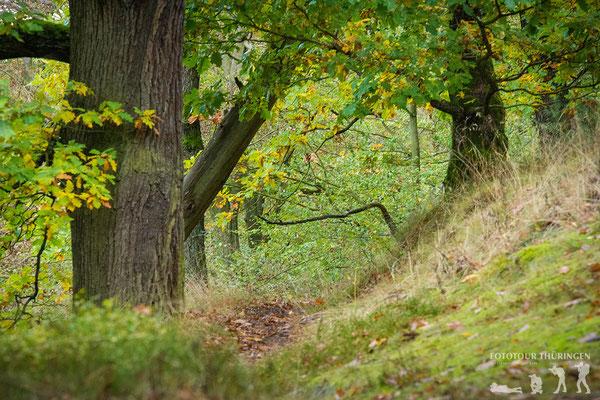 Naturbelassener Wald, Foto: Melanie Kahl
