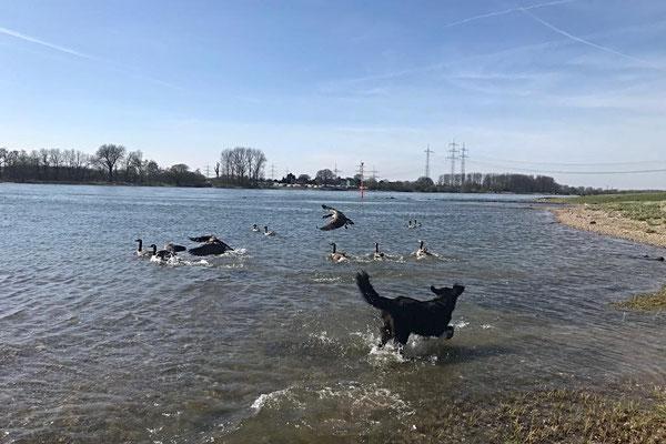 Rhein bei Leverkusen