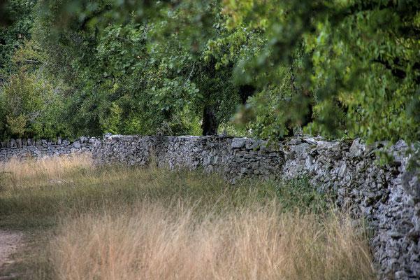Parc naturel des Causses du Quercy près du Cuvier de Saint Martin