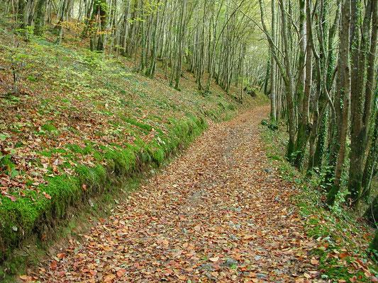 Chemins de randonnée près du Cuvier de Saint Martin