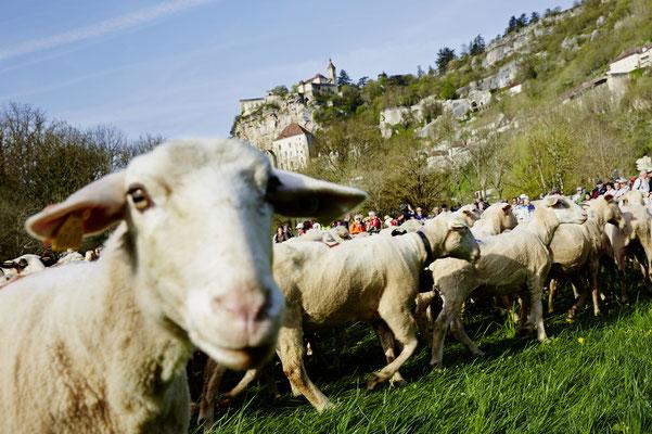 Départ de la transhumance au pied de la cité de Rocamadour