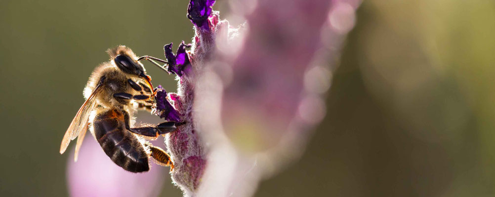 Ein Beitrag zur Nachhaltigkeit: Ihre Bienen-Patenschaft im Westerwald Unterstützen Sie nachhaltig unser Ökosystem STARTEN SIE IHR CSR-PROJEKT!