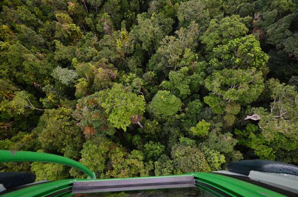 Vue sur la forêt tropicale depuis le téléphérique
