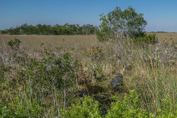 Shark Valley dans les Everglades en Floride
