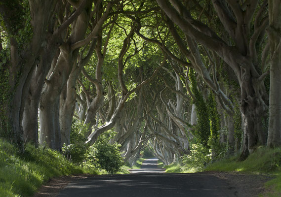 Dark Edges, célèbre décor de Games of Thrones - Tourism Ireland - Arthur Ward