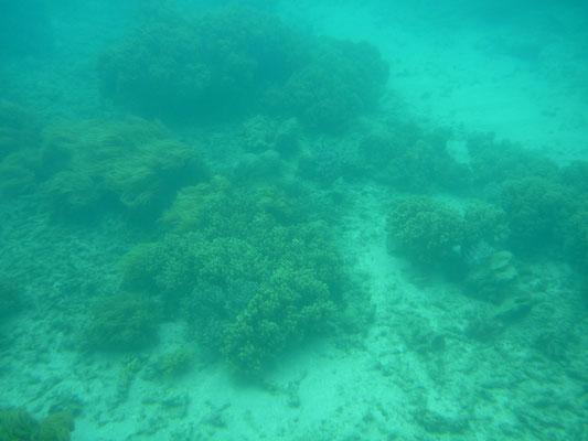 Photo faite sous l'eau à Green Island en Australie
